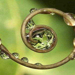 BIOGEOMETRIA NATURALEZA